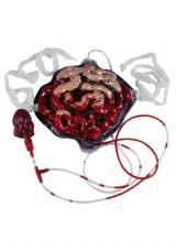 Bleeding-Intestines-Standard-0